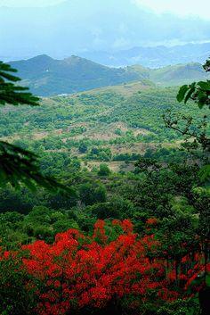 Paisaje con Flamboyán by Jorge Rodriguez (↑)   En las montañas de Puerto Rico