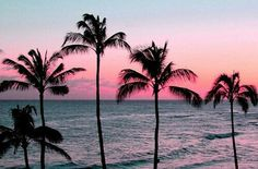 pink sunset with palm trees Palm Trees Tumblr, Sunset Tumblr, The Wicked The Divine, Photo Summer, Summer Photos, Photos Bff, Palm Tree Sunset, Image Beautiful, Beautiful Sunset