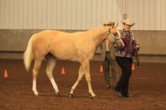 How to track your horse to the judge in a halter class