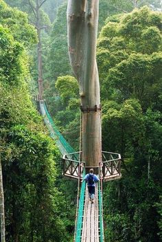 Borneo Jungles, Phillippines.