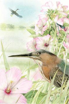 Green Heron - Marjolein Bastin