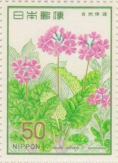 。Japanese postage stamp flower