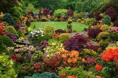 Four Seasons Garden - awesome orange, yellow and coral azaleas
