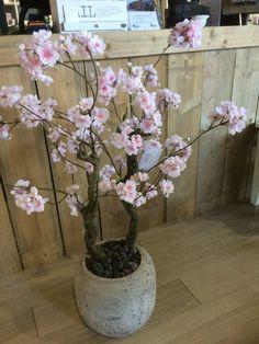 Prachtige bloesemboom, genoeg op voorraad! Bericht (www.annefleurs.nl) of kom…