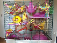Such A Cute Cage Set Up