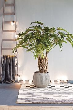 70 Trendy Home Office Design Green Plants Country Decor Diy, Office Plants, Trendy Plants, Modern Office Design, Green Plants, Home Office Design, Big Indoor Plants, Indoor Plants, Trendy Home