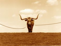 Bevo    Re-Pinned by: http://high5collegeclub.com