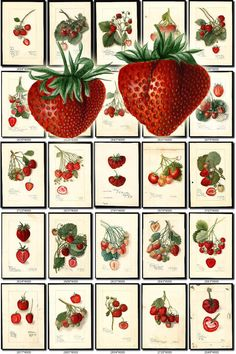 Polymer clay tutorial Collection of 240 vintage images pictures High resolution digital Retro Images, Vintage Pictures, Vintage Images, Strawberry Pictures, Red Succulents, Strawberry Garden, Strawberry Kitchen, Edible Garden, Antique Maps