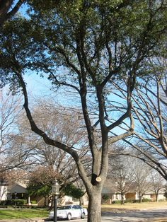 """""""Five Common Tree Pruning and Trimming Mistakes"""" from Preservation Tree"""