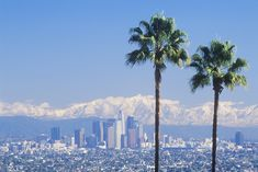 Picture of Two palm trees, Los Angeles and snowy Mount Baldy as seen from the Baldwin Hills, Los Angeles, California stock photo, images and stock photography. Los Angeles Palm Trees, Seattle Skyline, New York Skyline, Baldwin Hills, Street Trees, Los Angeles County, Walking In Nature, Travel And Leisure, Nature Photos