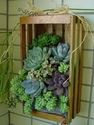 48 Awesome Repurposed Succulent Planters Ideas - Succulents are perfect plants for dry gardens and are easy to root and grow. Once you learn how easy it is to propagate succulent plants, it's a great. Succulents In Containers, Container Plants, Cacti And Succulents, Planting Succulents, Container Gardening, Planting Flowers, Vertical Succulent Gardens, Succulent Gardening, Succulent Planters