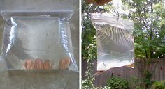 Hanging  A Bag Filled Pennies And Water In Your Backyard, This Super Simple Trick Everyone Can Use To Keep The Flies Out Of The Backyard.	http://subzero.topratedviral.com/article/keeps-pennies-in-bag-filled-with-water-on-back-porch-for-entire-summer-good-to-know-/promote/1001615