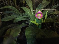 Stadshoeve de Tuin Plant Monster. Lego Minifigures 14 Monsters Plant Monster photographed at night in October at the Stadshoeve de Tuin in Tilburg to celebrate Halloween. #StadshoeveDeTuinPlantMonster #LegoMinifigures14Monsters #LegoMinifigures14 #Lego14 #PlantMonster #night #October #StadshoeveDeTuin #Tilburg #Netherlands #Nederland #Halloween