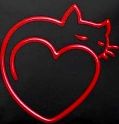 Cat in a Heart