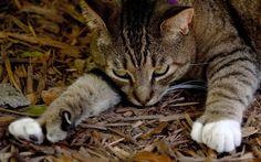 Gatos de Hemingway, Florida. Este local é um reduto de gatos com 6 dedos. Cerca de 50 habitam a casa do falecido escritor Ernest Hemingway.