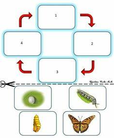 Preschool Bug Theme, Preschool Education, Preschool Learning Activities, Preschool Math, Kids Learning, Kindergarten, Animal Activities For Kids, Science For Kids, Insect Crafts