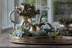 Succulents for Two: A Tarnished Tea Party Cool way to showcase succulents--in an old tea set and tray! for Two: A Tarnished Tea Party Cool way to showcase succulents--in an old tea set and tray!Cool way to showcase succulents--in an old tea set and tray! Diy Vintage, Vintage Silver, Antique Silver, Tarnished Silver, Succulents In Containers, Succulents Diy, Silver Tea Set, Mawa Design, Silver Trays