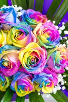 All Flowers, Amazing Flowers, Beautiful Roses, Colorful Wallpaper, Cool Wallpaper, Rainbow Roses, Over The Rainbow, Pretty Wallpapers, Aesthetic Iphone Wallpaper