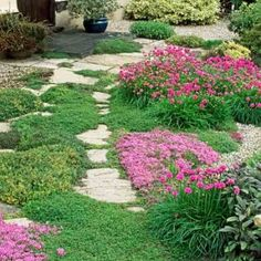 Backyard Ground Cover 304 best groundcover ideas images on pinterest in 2018 | beautiful