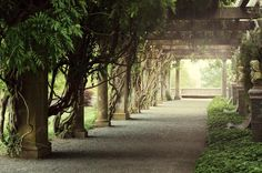Biltmore House - The Pergola is a beautiful outdoor walkway just below the South Terrace covered in wisteria vines and flanked by graceful wall fountains.