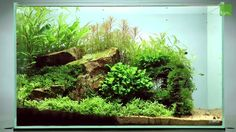 Aquascape by James Findley.