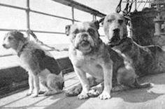 Una exposición en la Widener University Art Gallery en Pensilvania, pone el énfasis en las increíbles historias de los perros del Titanic, con fotos de los animalitos y cuentan qué fue de sus destinos. Sólo tres de los 12 perros confirmados a bordo sobrevivieron a la tragedia, pero el hecho de que los animales sobrevivieron a las gélidas temperaturas y al caos general de esa noche, es verdaderamente notable.