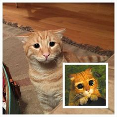 Mommy posted Marty's Puss in Boots impression on #reddit. What do you think? We think it's #purrfect!