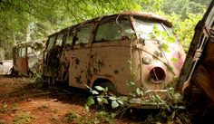 23 Window VW Buses in the Undergrowth