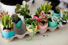 eggshell succulent planters!