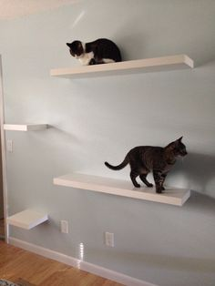 Thanks Ikea for the idea for cat shelves! Staggered Ikea LACK white shelves in two lengths