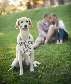 Including Pets in Wedding Fun on itsabrideslife.com  #petsinwedding #dogsinwedding