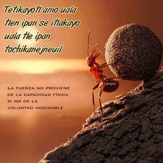 Aquí te presentamos las 5 mejores frases compartidas en Septiembre del 2014 en nuestro pagina de facebookhttps://www.facebook.com/hablemosnahuatlmx  Acerca de Jose Nicanor Con más de 30 años de experiencia directa en el idioma náhuatl, es hablante nativo, ha entrenado a profesionistas en cursos presenciales y conferencias en Instituciones. Fungió como profesor en Educación Bilingüe, Es …