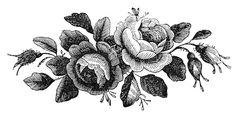 Antique Stock Images - Rose Engravings - Godey's - The Graphics Fairy