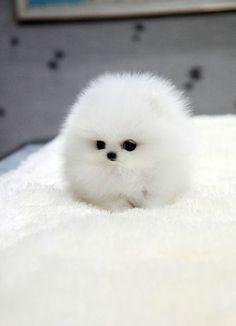 A ball of fluff......