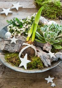 Mooi, zo'n levende #kerstdecoratie op schaal! En simpel zelf te maken... #DIY Nordic Christmas, Christmas Signs, White Christmas, Christmas Time, Christmas Decorations, Xmas, Holiday, Christmas Flower Arrangements, Christmas Flowers