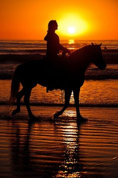 Horseback riding on the beach at sunset in Pretty Horses, Horse Love, Beautiful Horses, Beautiful Dream, Running Horses, Horse Photography, Photo Instagram, Horse Riding, Horseback Riding