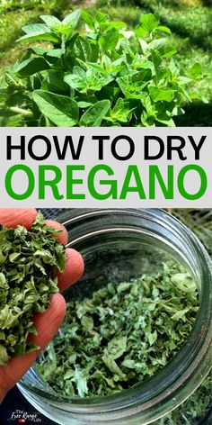 Do you have a garden full of oregano you'd like to preserve? Learn how to dry oregano so you can enjoy that great oregano taste in dishes and meals all year long! Fruits And Veggies, Vegetables, Harvest Time, Preserving Food, How To Dry Oregano, Preserves, Gardening Tips, Herbs, Yummy Food