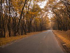 The latest from Sebastian Moise Transylvania Romania, Moise, Dracula, Autumn, Fall, Medieval, Country Roads, Photography, Te Amo