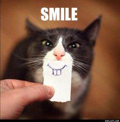 buck tooth kitty