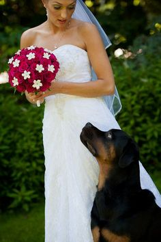 oh i can guarentee that i would of had maverick at my wedding if he would of been born back then lol #Rottweiler