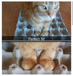 The Funny Side Of Cat Paws (Memes And Photos) - World's largest collection of cat memes and other animals Funny Animal Memes, Funny Animal Pictures, Cat Memes, Cute Pictures, Funny Animals, Cute Animals, Funny Memes, Funniest Animals, Funniest Pictures
