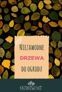 Artykuł o bezproblemowych drzewach do ogrodu, na stronie krzakowisko.pl