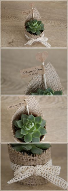 Lovely Colors // Minik Bitki, Succulents as cute little wedding giveaways. These…