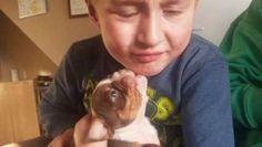 Autistische kinderen ontroostbaar na brute diefstal puppy's - HLN.be