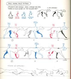 dog animation reference richard williams walkcycles deaduseful
