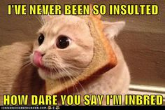 funny cat pictures - Lolcats: I'VE NEVER BEEN SO INSULTED