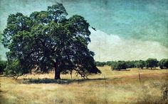 tree,landscape,background,old,photo wallpaper