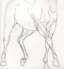 how to draw a horse head step by step Horse Head Drawing, Horse Drawings, Animal Drawings, Art Drawings, Animal Sketches, Art Sketches, Horse Drawing Tutorial, Horse Sketch, Horse Anatomy