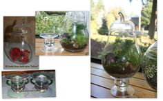 For the weekend !! Terrariums