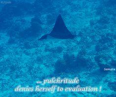 ... #pulchritude denies herself to #evaluation !